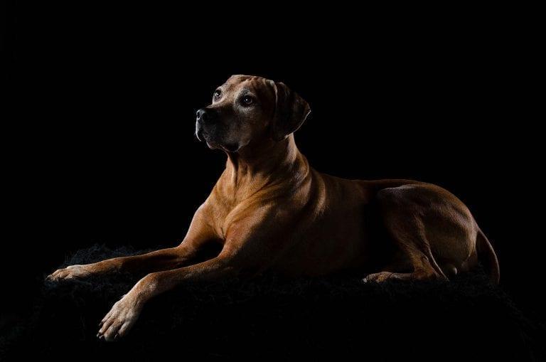 Huisdierfotografie hond 2